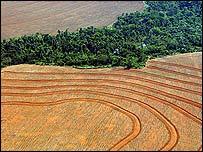 Deforestaci�n para la producci�n de soja en el Amazonas