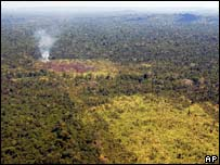 Burned area of forest in Para  in file photo from 2006