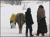Children and donkey in the snow