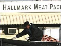 An employee treads on scraps from animal carcasses at the Hallmark Meat Packing slaughterhouse in Chino, California