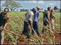 Agricultores en Cuba