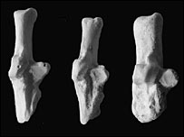 Lagomorph ankle bones