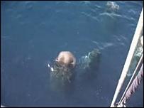 Whales sleeping