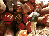 Illegal mahogany logs in Brazil (PA)