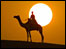 Camel and sun