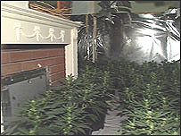 Plants seized in a police raid
