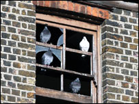 Pigeons in the window of an empty house