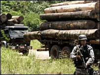 Soldier stands guard by a pile of illegally logged timber in Tailandia