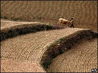 A wheat field after harvest in China