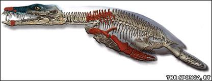 Pliosaur (Tor Sponga, BT)