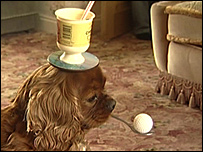 Cindy the spaniel demonstrates one of her tricks