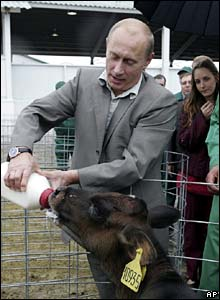 Putin feeds calf at farm in Belgorod region in September 2007
