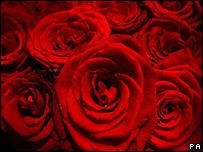 Red roses (archive)