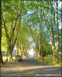 Avenue of plane trees. Image: Bill Ambridge