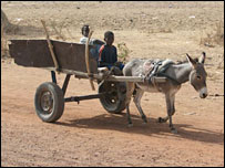 Donkey and cart
