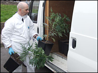 Sgt Jim Neeson clearing cannabis plants from the house