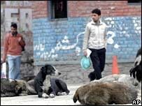 Stray dogs in Srinagar, Indian-administered Kashmir