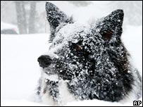 A dog plays in the snow in Canada