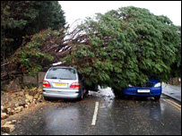 Tree lands on car (Pic:Terry Simon Aldous)