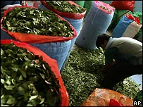 Coca leaves in La Paz market - 1 March 2007
