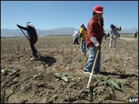 Mexican workers in California