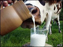 A cow and a glass of milk in Normandy, France