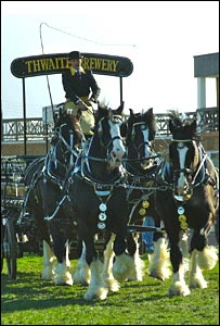 Thwaites Brewery Shire horses