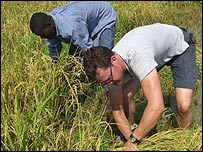 Stefan (R) and Maye (L) cutting rice in Artibonite Valley