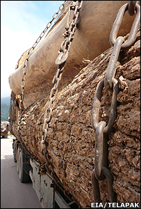 Logs on a lorry (Image: EIA/Telapak)