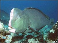 Parrotfish. Image: PA