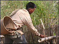 Rat catcher Sangram setting his bamboo traps