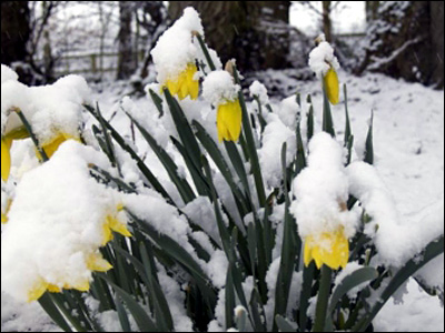 http://newsimg.bbc.co.uk/media/images/44510000/jpg/_44510735_snowdaffs_300.jpg