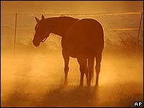 A horse (generic image)