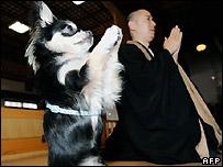 Собака и священник