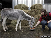 Monika the donkey is fed at St Petersburg Zoo