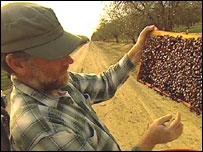 Beekeeper Gilly Sherman