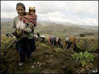 Mujer campesina durante la cosecha de papa en Huancavelica, Perú.