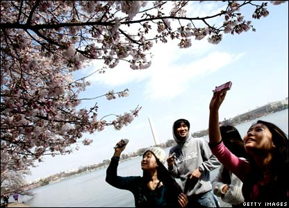 Japanese students take pictures of cherry blossoms at the Tidal Basin in Washington, DC.