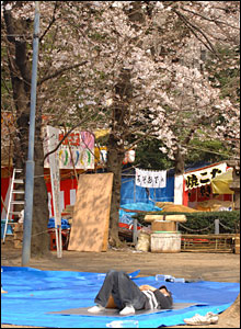 Man under cherry tree, Japan  (photo James Cope)