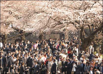 People and cherry trees, Japan (Photo James Cope)