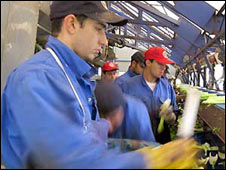 Eastern European workers picking celery