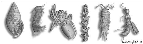 Organismos fosilisados (ESRF)