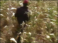 Crops at a previously white-owned farm in Zimbabwe