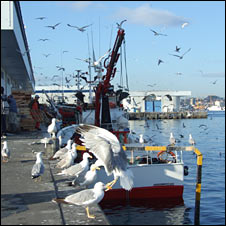 Fishing harbour. Image: BBC