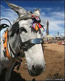 donkey on blackpool beach