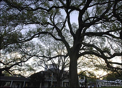 The old oak tree at Augusta National