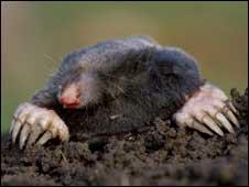A mole