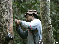 A man harvests rubber at a rubber plantation in Xapuri, Brazil (file picture)