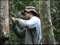 Un hombre en una plantación en  Xapuri, Brasil (Foto: Archivo)