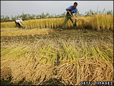 File photo of Chinese farmers harvesting rice in October 2007